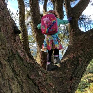 Tree climbing at Gummer's How