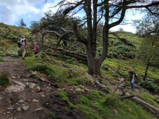 On the way up Gummer's How